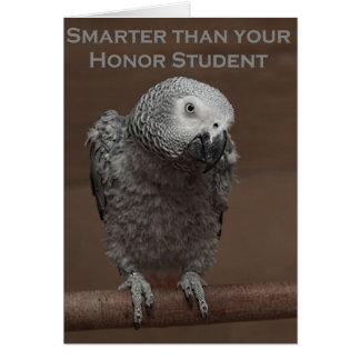 African Gray Parrot Smarter Than Your Honor Studen Card