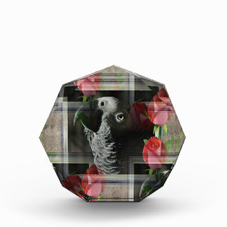 African Grey and Geometric Red Roses Award