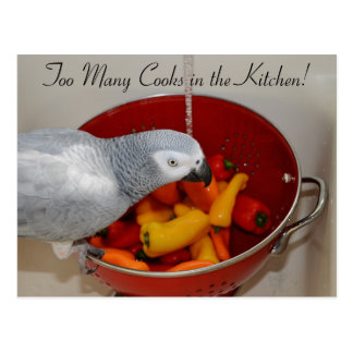 African Grey and Sweet Peppers Postcard