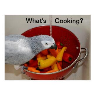 African Grey Cooking Kitchen Helper Postcard