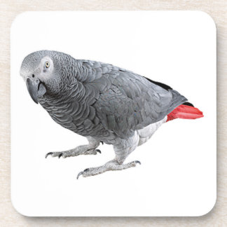 """African grey"" design square coasters"