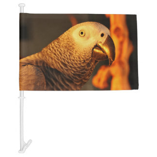 African Grey Gold Sunset Car Flag