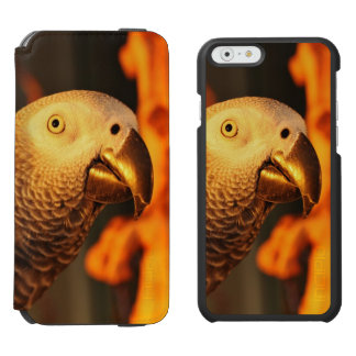 African Grey Gold Sunset iPhone 6/6s Wallet Case