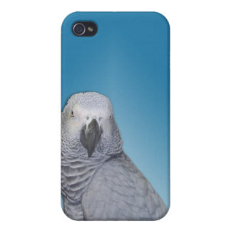 African Grey iPhone 4 Case