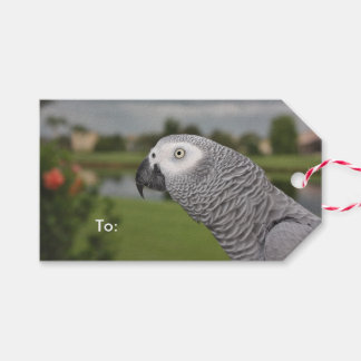 African Grey Lakeside Pack Of Gift Tags