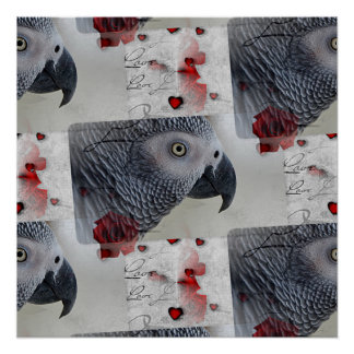 African Grey Love Letters Poster