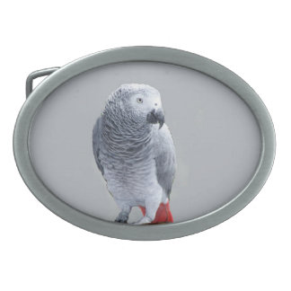 African  Grey Oval Belt Buckle