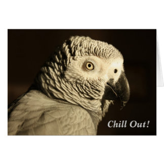 """African Grey Parrot """"Chill Out!"""" Greeting Card"""