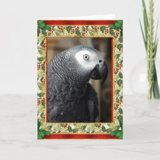 African Grey Parrot Christmas Card