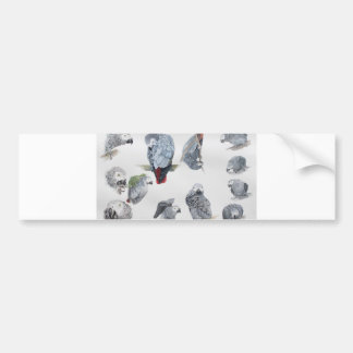 African Grey Parrot. Exclusive designed by Griff Bumper Sticker