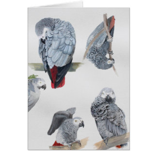 African Grey Parrot. Exclusive designed by Griff Card