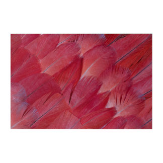 African Grey Parrot Feather Design Acrylic Print