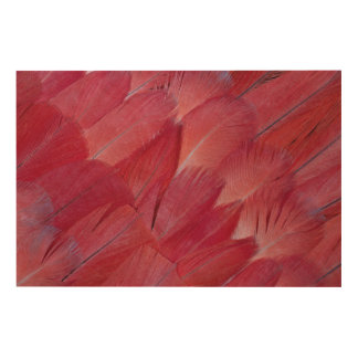 African Grey Parrot Feather Design Wood Print