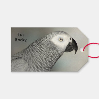 African Grey Parrot Pack Of Gift Tags