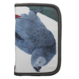 African grey parrot gifts planners
