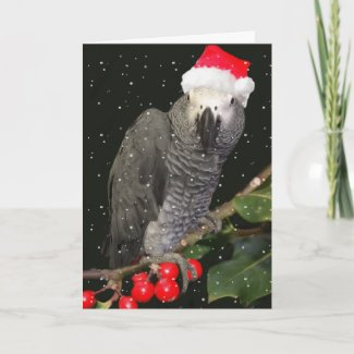African Grey Parrot Holiday Season