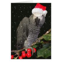 African Grey Parrot Holiday Season Card