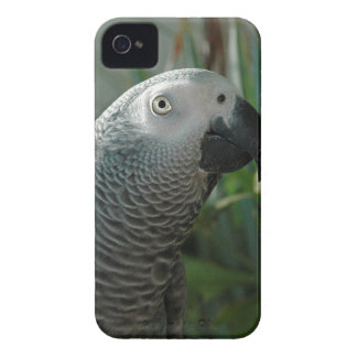 African Grey Parrot iPhone 4 Case-Mate Case