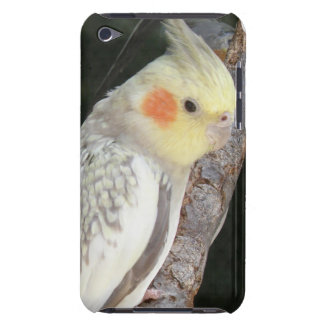 African Grey Parrot iTouch Case iPod Case-Mate Cases