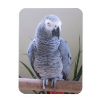 African Grey Parrot Magnet