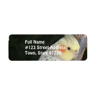 African Grey Parrot Mailing Label