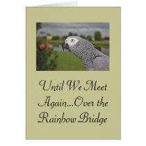 African Grey Parrot Pet Sympathy Card