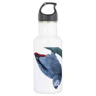 African grey parrot 18oz water bottle