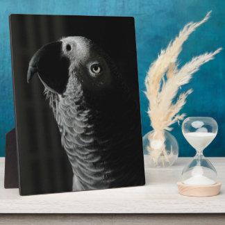 African Grey Parrot Plaque