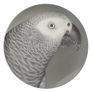 African Grey Parrot Dinner Plates