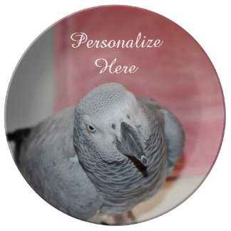 African Grey Parrot Porcelain Plate