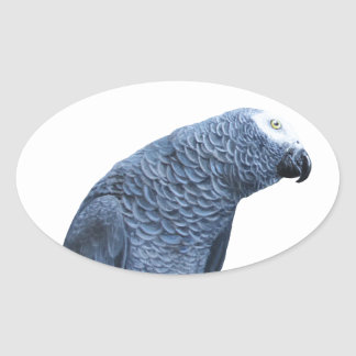 African Grey parrot portrait Oval Sticker