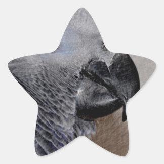 African Grey Parrot Star Sticker
