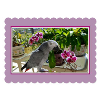 African Grey Parrot with Orchids 5x7 Paper Invitation Card