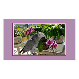 African Grey Parrot with Orchids Business Card
