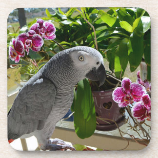 African Grey Parrot with Orchids Drink Coaster