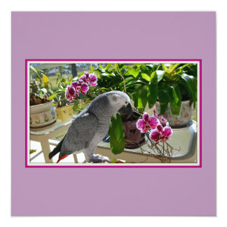African Grey Parrot with Orchids Invitation