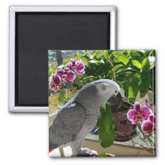 African Grey Parrot with Orchids Magnet