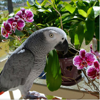 African Grey Parrot with Orchids Statuette