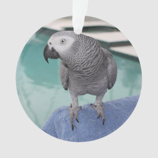 African Grey Pool Party