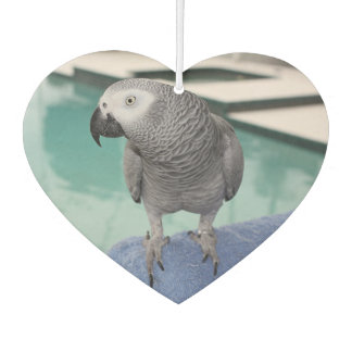 African Grey Pool Party Air Freshener