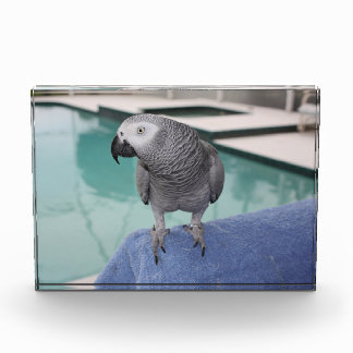 African Grey Pool Party Award