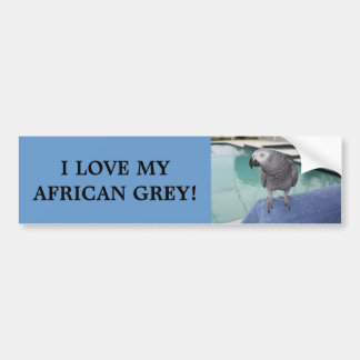 African Grey Pool Party Bumper Sticker