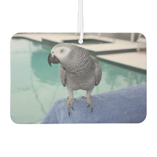 African Grey Pool Party Car Air Freshener