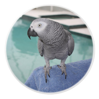 African Grey Pool Party Ceramic Knob
