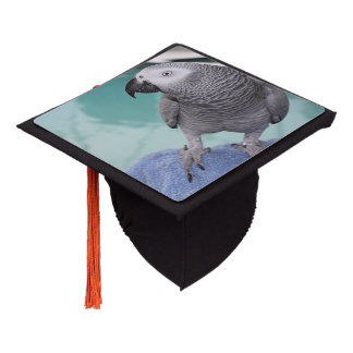 African Grey Pool Party Graduation Cap Topper