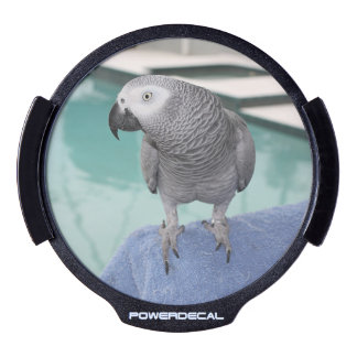 African Grey Pool Party LED Car Decal