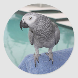 African Grey Pool Party Round Stickers