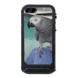 African Grey Pool Party Waterproof iPhone SE/5/5s Case