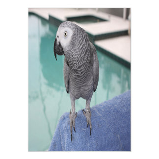 African Grey Pool Party Magnetic Invitations