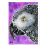 African Grey Post Card